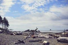Рубиновый Driftwood пляжа, Вашингтон Стоковые Фото