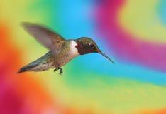 рубин hummingbird throated Стоковая Фотография