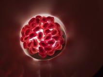 рубин pomegranate зерен плодоовощ Стоковая Фотография