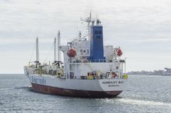 Рубрика залива Гумбольдта Reefer в канюков преследует Стоковые Фото