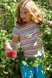 рудоразборка девушки ягод Стоковая Фотография RF