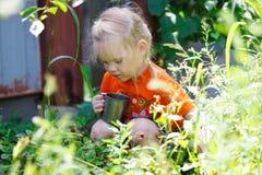 рудоразборка ягоды Стоковое Фото