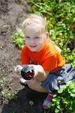 Рудоразборка ягоды Стоковая Фотография