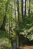 руек Германия меньшяя весна Стоковые Фото