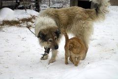 2 друзья, кот и собаки Стоковая Фотография