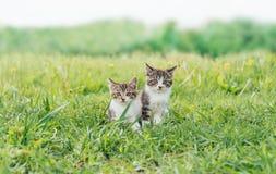 2 друз котят Стоковые Изображения