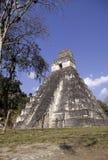 руины Гватемалы майяские tikal Стоковое Фото