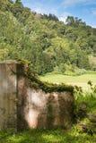 Руины дома в свежей природе стоковые фото