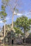 Руины животиков Prohm в Siem Reap, Камбодже. Стоковое Изображение