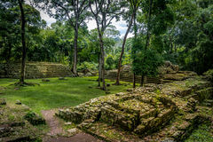 Руины жилого района майяских руин - археологических раскопок Copan, Гондураса Стоковое фото RF