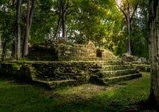 Руины жилого района майяских руин - археологических раскопок Copan, Гондураса Стоковое Изображение RF