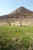Руины замка hrad виноградника и Divci в горах Palava в южной Моравии Стоковая Фотография