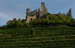 Руины замка Seftenberg Стоковые Изображения RF