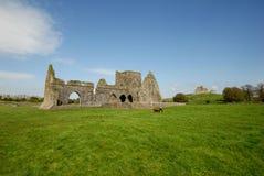 руины Ирландии hore cashel аббатства Стоковые Фото