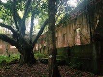 Руины истории Амазонки стоковая фотография rf