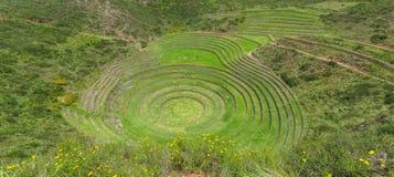 Руины мурены в Cusco, Перу Стоковое фото RF