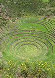 Руины мурены в Cusco, Перу Стоковое Изображение RF