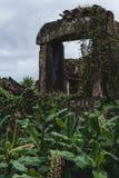 Руины перерастанные с лозами в Португалии стоковая фотография