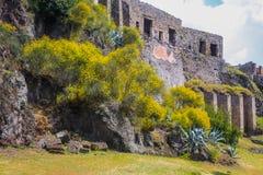 Руины Помпеи - время весны, зацветая кусты стоковое изображение rf