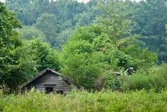 руины пущи Стоковая Фотография
