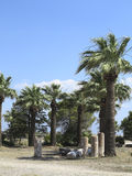 Руины столбцов древнего храма, пальм и голубого неба Стоковые Фото