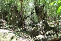 Руины японца на Tinian Стоковые Изображения RF