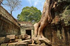 Руины Angkor Wat в джунглях Стоковая Фотография RF