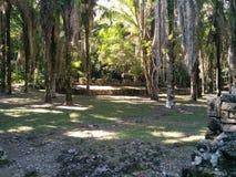 Руины Kohunlich майяские глубоко в джунглях стоковое изображение rf