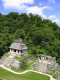 руины palenque Мексики maya chiapas майяские стоковое фото