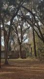 Руины Tabby сахарного завода McIntosh Стоковая Фотография