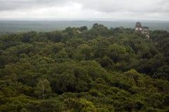 Руины Tikal между джунглями низменности Гватемалы Стоковые Фотографии RF