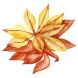 Рука акварели покрасила иллюстрацию кленового листа осени оранжевую изолированный на белой предпосылке иллюстрация штока