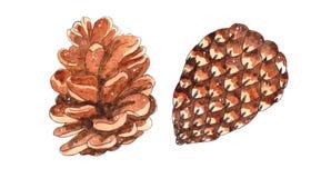 Рука акварели покрасила конусы изолированный на белой предпосылке иллюстрация штока