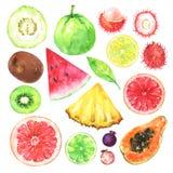 Рука акварели покрасила экзотические плодоовощи установленный иллюстрация штока