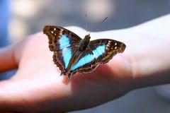 рука бабочки Стоковые Изображения