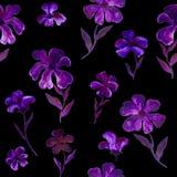 Рука безшовного цветочного узора фиолетовая и фиолетовая покрасила цветки на темноте Стоковые Изображения