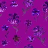 Рука безшовного цветочного узора фиолетовая и фиолетовая покрасила цветки на темноте Стоковое Фото