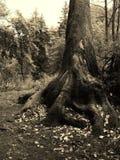 Рука бога Стоковая Фотография RF