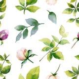 Рука вектора акварели крася безшовную картину цветков пиона и листьев зеленого цвета Стоковые Изображения