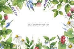 Рука вектора акварели покрасила флористическую рамку с зелеными травами и специями иллюстрация вектора
