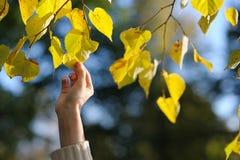 рука выходит s касающий желтый цвет женщины Стоковое Фото