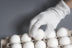 Рука в белой перчатке держа яичка цыпленка белые стоковая фотография rf