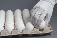 Рука в белой перчатке держа яичка цыпленка белые стоковые фотографии rf