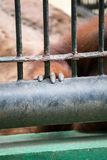 Рука гориллы Стоковые Фото