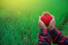 Рука дает влюбленность сердца друг к другу Стоковое фото RF