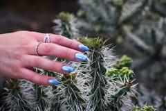 Рука девушки касаясь кактусу стоковое изображение rf