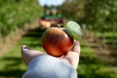 Рука держа вне яблоко стоковая фотография