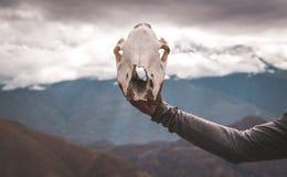 рука держа животную предпосылку облаков горы черепа стоковое изображение