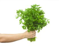 Рука держа лист петрушки vegetable изолированный стоковое фото rf