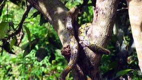 Рука держа ручку пробуя уловить змейку Phyton пока избегающ на дереве видеоматериал